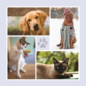 Dog and Cat photo collage